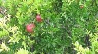 krajobraz - owoce